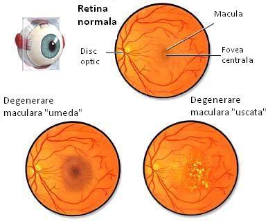 Primul pas pentru noii ochelari de vedere: examenul oftalmologic | scutere-galant.ro