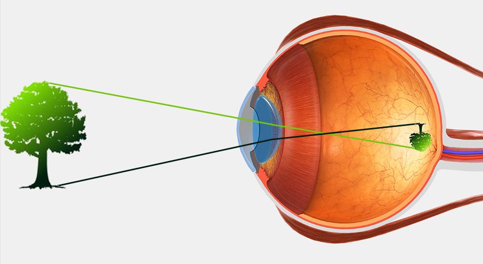 Organul structurii vederii și funcția mesei oculare