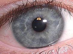 2 vizualizări într-un singur ochi viziune combinată