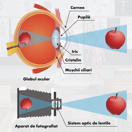 Cum să scapi de miopie de unul singur - Cum să vindeci miopia într-un singur ochi