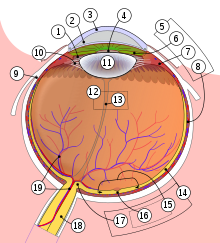 Ochi - Wikipedia
