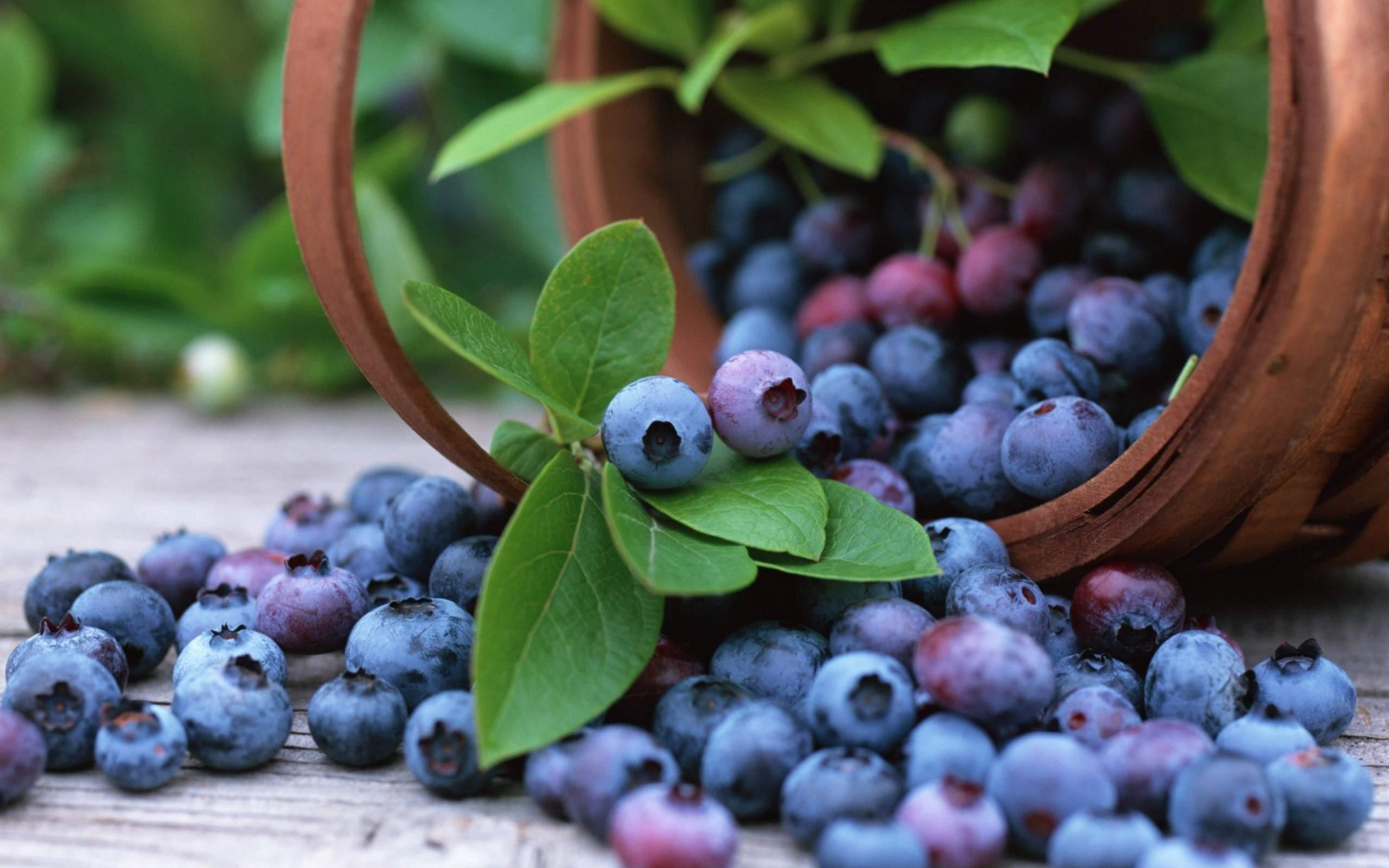 Cum este afine utile pentru ochi și viziune? - Miopie September