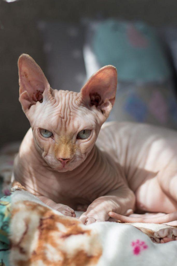 poate trăi o pisică fără vedere