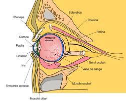 structura organelor vederii