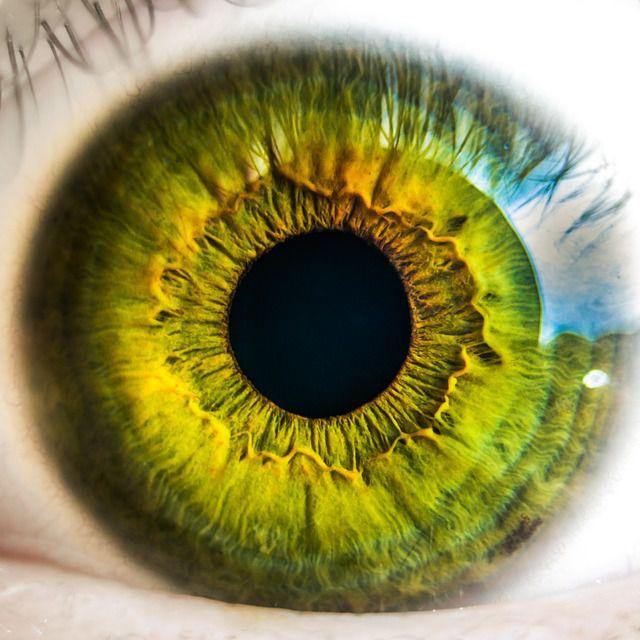 Vitamine și rețete populare pentru îmbunătățirea viziunii - Uleiul