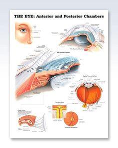 metode de fizioterapie a vederii