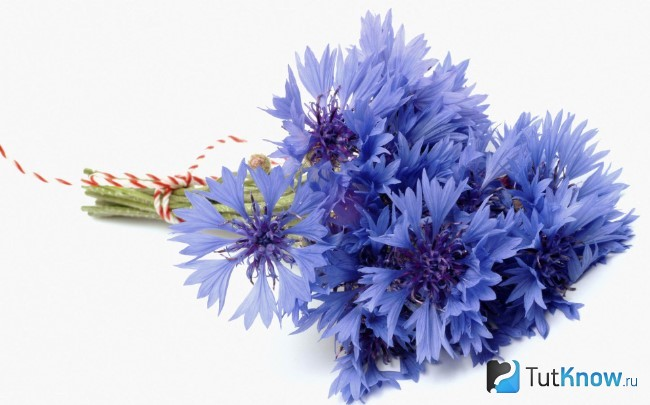 flori de porumb pentru a îmbunătăți vederea care îmbunătățește fructele de vedere