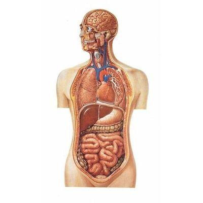 viziunea umană dao tinnitus durere de cap microstrokes viziune