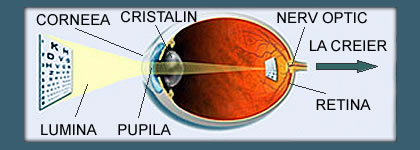 ochi cu vedere normală