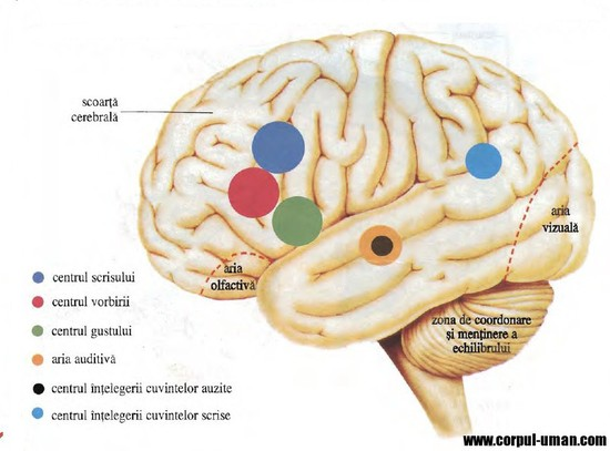 efectul vederii asupra creierului