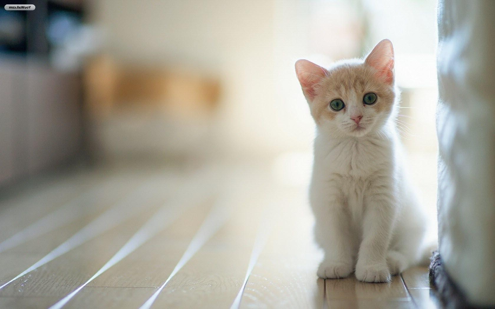Comportamentul pisicilor, sau cum să vă înțelegeți pisica