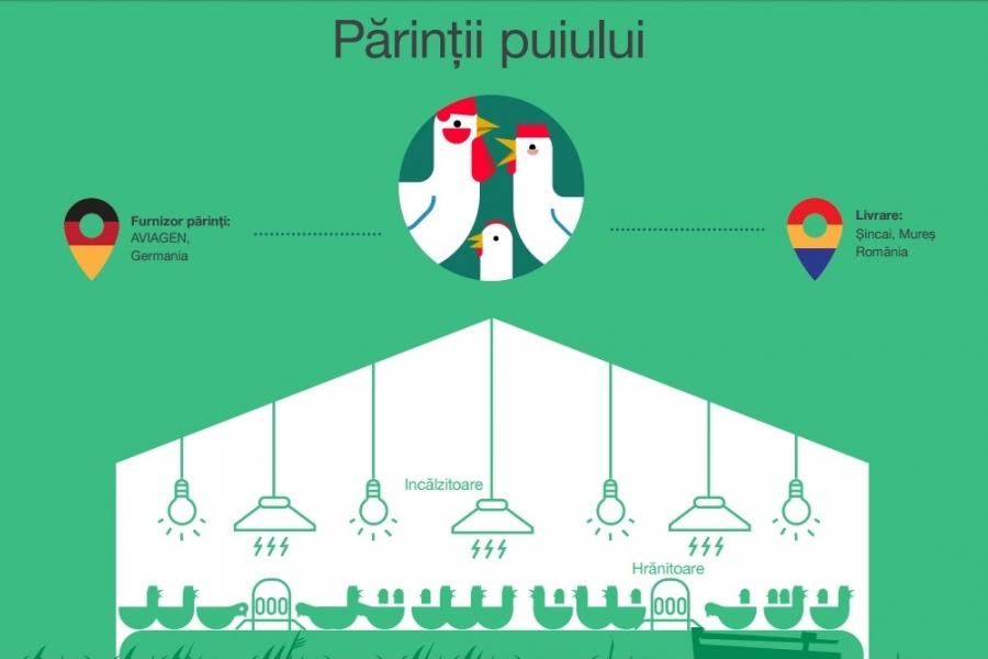 7 lucruri care li se întâmplă puilor de animale în ferme | Vegan în România