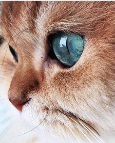 hiperopia modelului de ochi