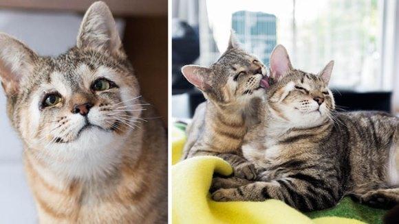 cum să redea vederea unei pisici acuitatea vizuală 09