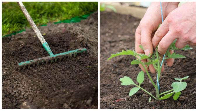 Rasaduri de legume – cum le produci si valorifici?