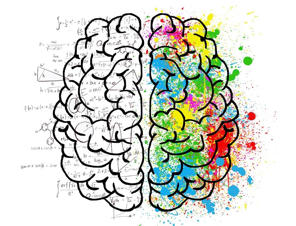 care parte a creierului este viziunea refacerea vederii negre