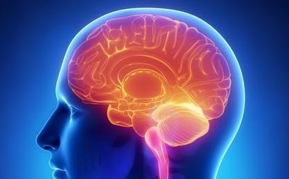 care parte a creierului este viziunea măsura acuității vizuale