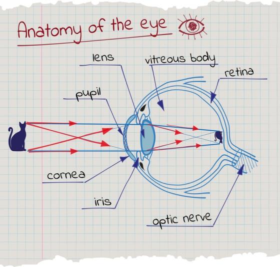 Snellen Eye Snellen Eye Chart pentru testarea viziunii