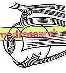 Viziune monoculară și binoculară (stereoscopică)