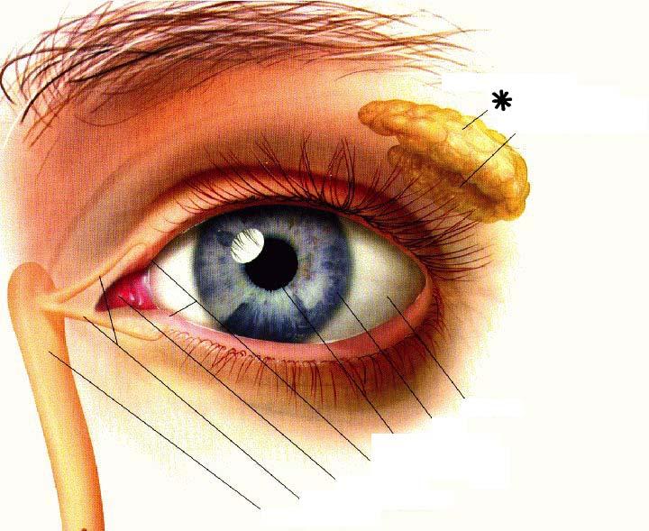 Canale lacrimale