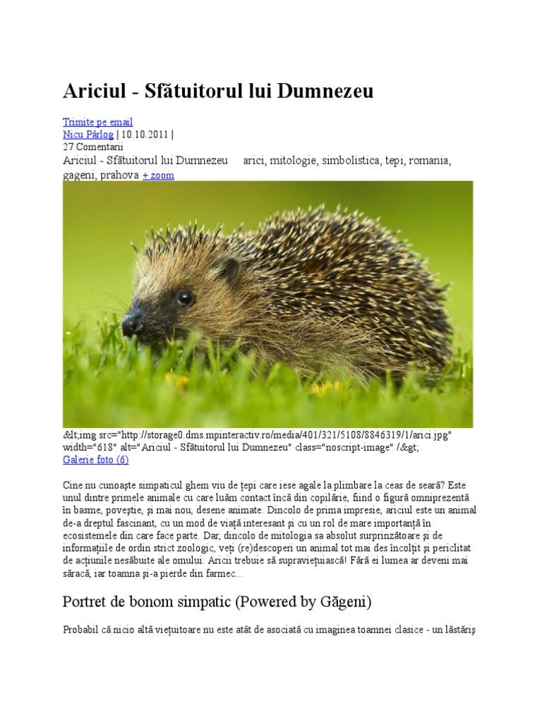 Fapte interesante Hedgehog
