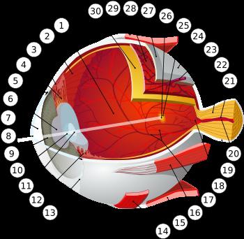 ochiul este apos și viziunea devine tulbure diferențe de astigmatism și miopie