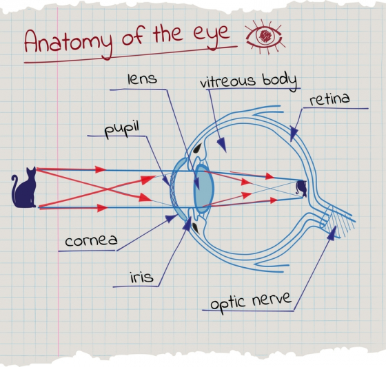 dacă vederea la un ochi s-a deteriorat
