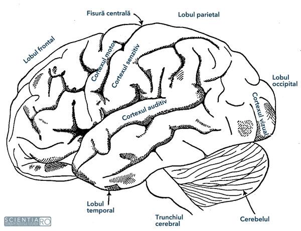 funcțiile vizuale și motorii