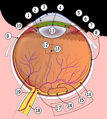 restricție în câmpul vizual al ochiului