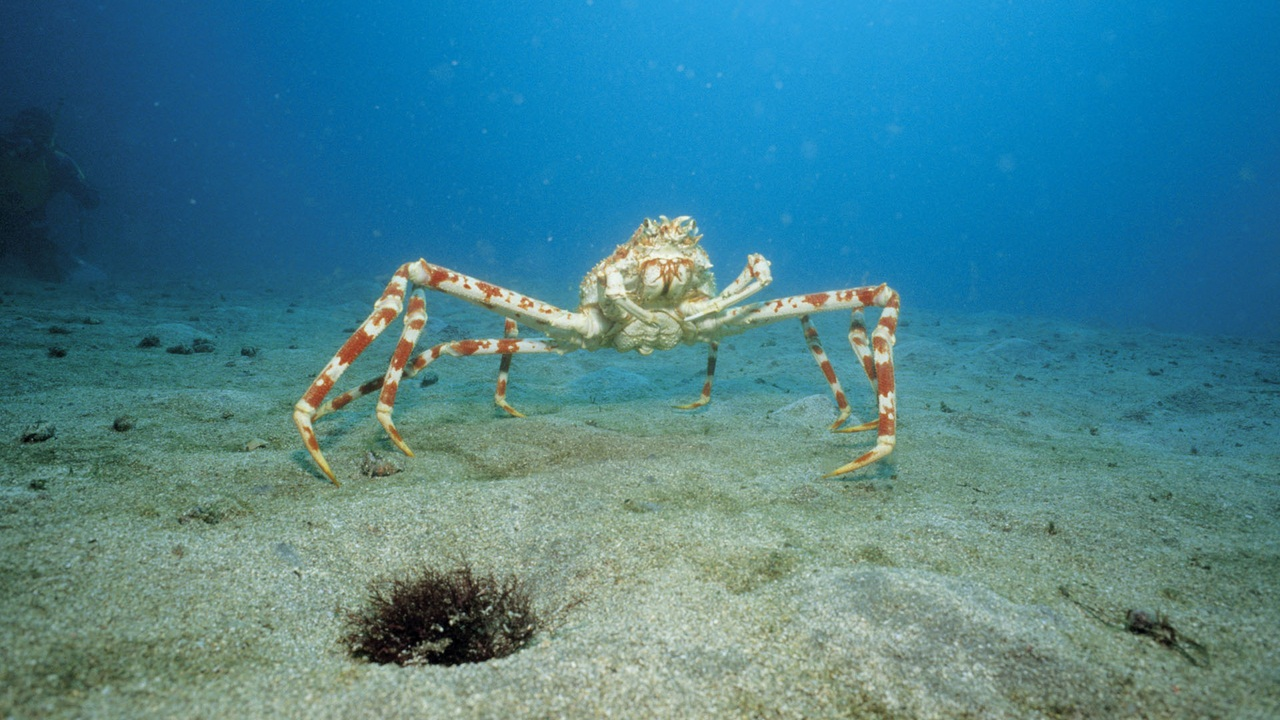 viziune la crabi