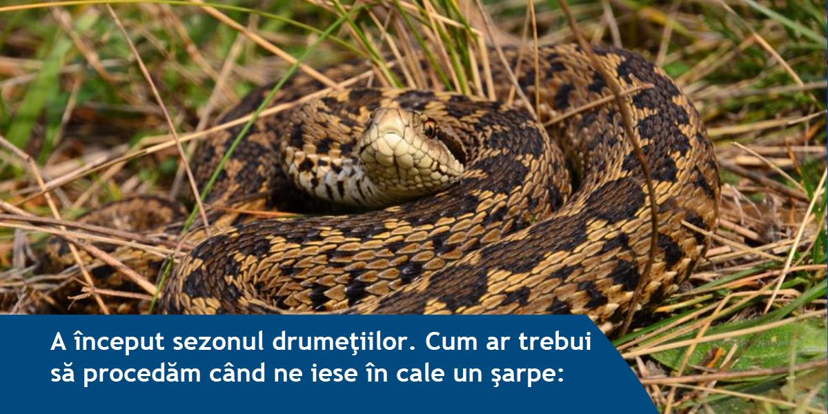 Cum trebuie să reacționezi, când întâlnești un șarpe. Care sunt sfaturile salvamontiștilor