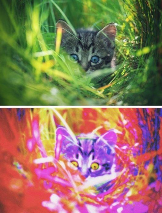 Cele mai frecvente boli de ochi la pisici și cum se tratează