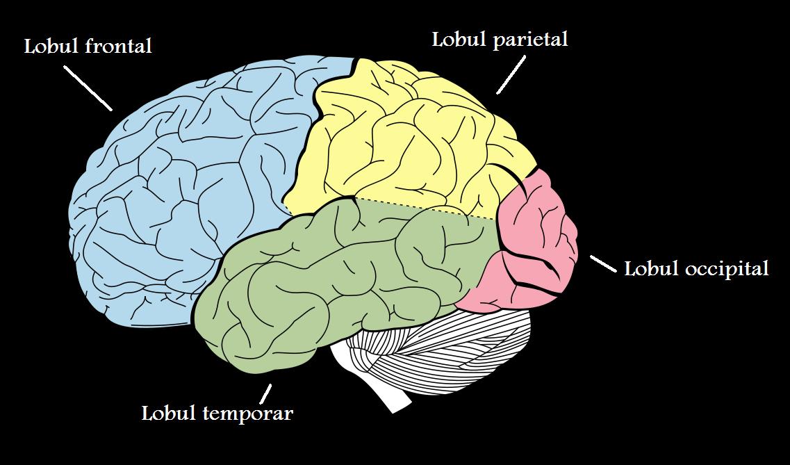Accidentul vascular cerebral - scutere-galant.ro